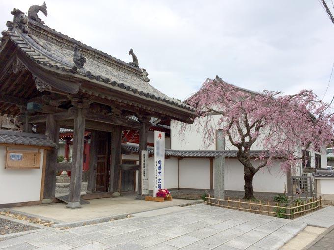 龍雲寺のしだれ桜