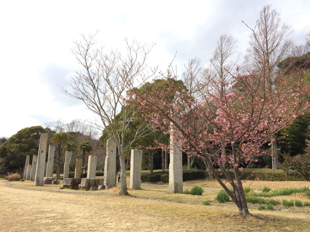 佐鳴八景歌碑付近の河津桜