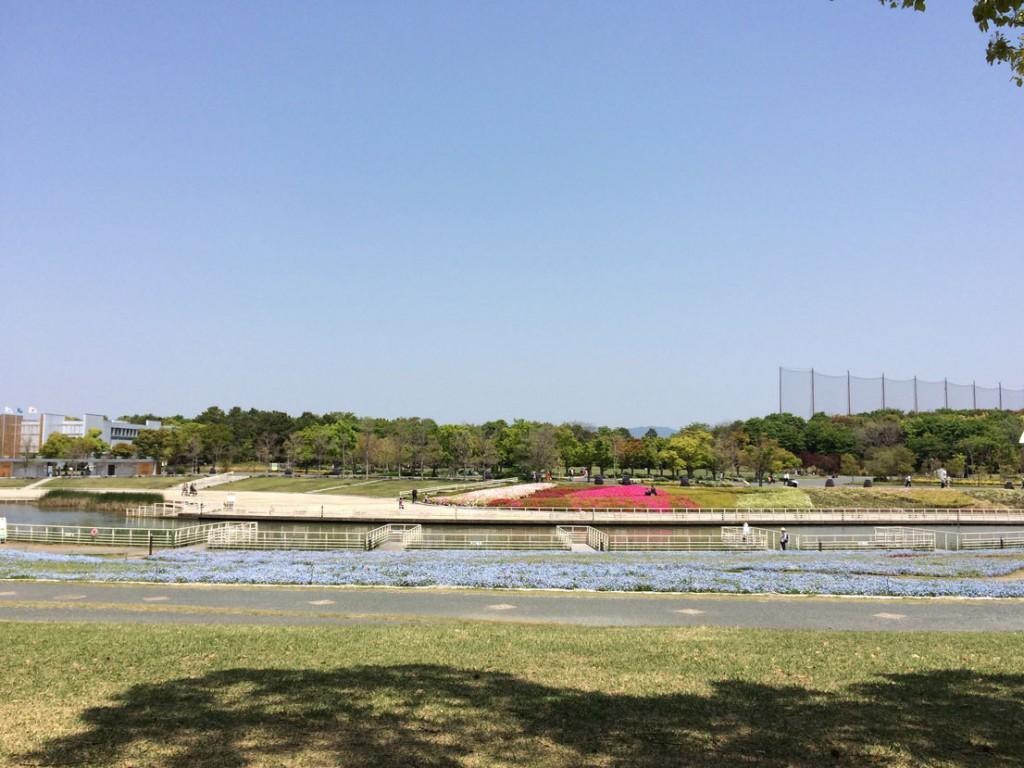 浜名湖ガーデンパークのネモフィラ、南側から