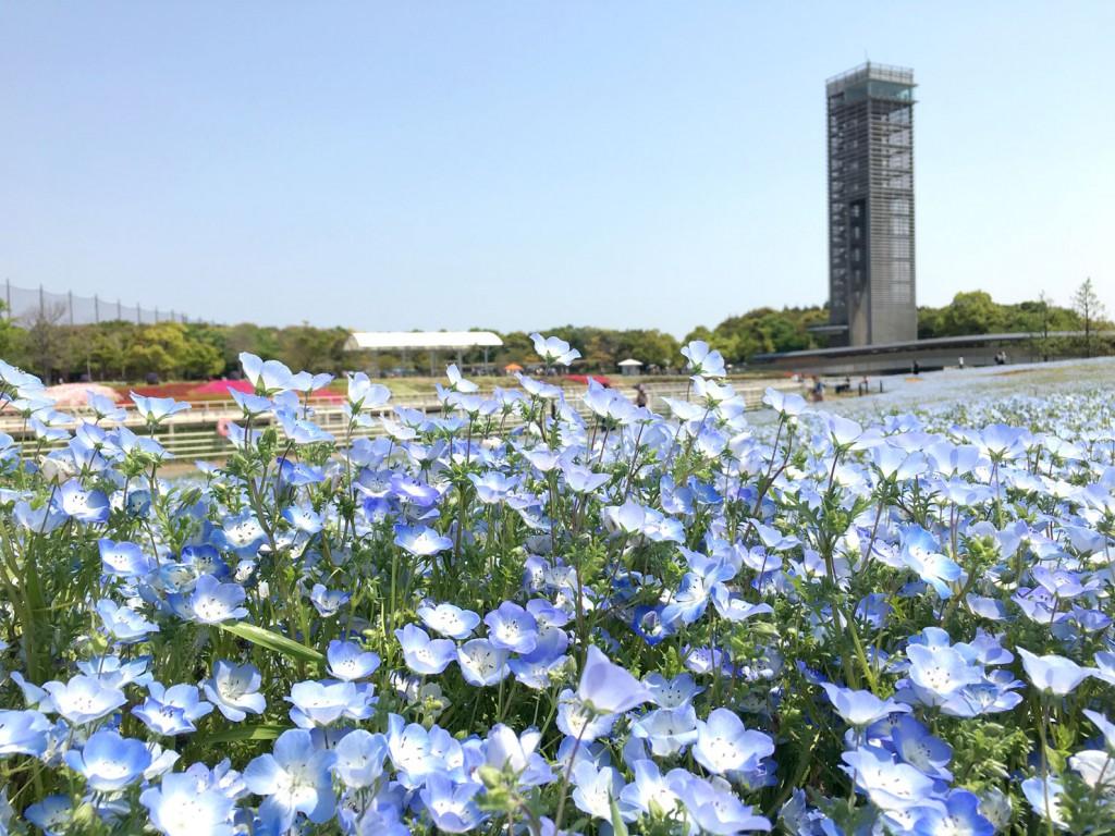 ネモフィラと浜名湖ガーデンパークの展望台