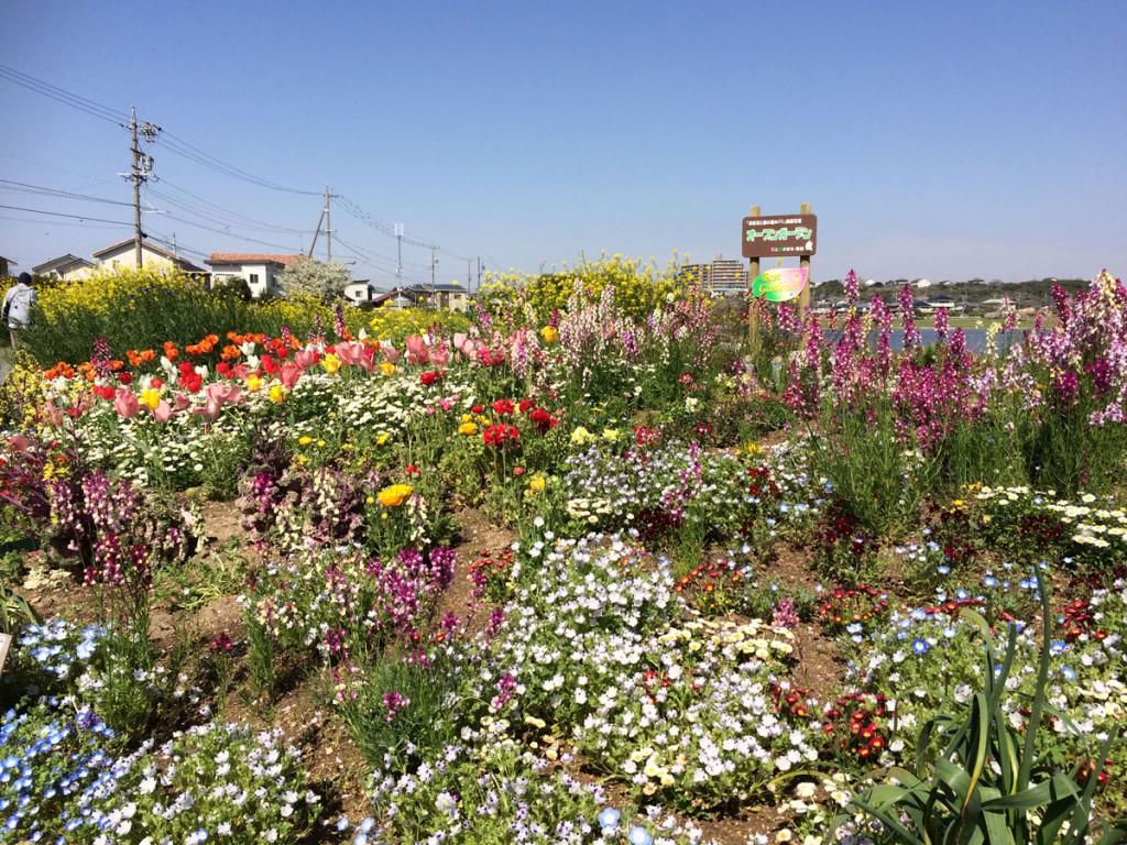 佐鳴湖東側の花壇