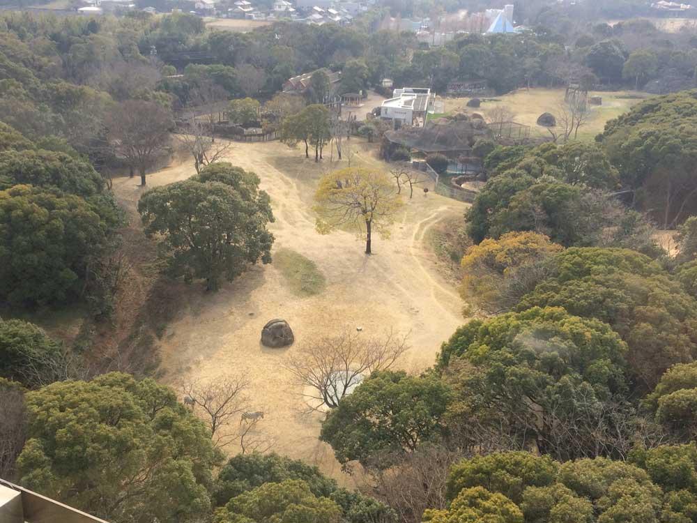 展望塔から地上を眺める
