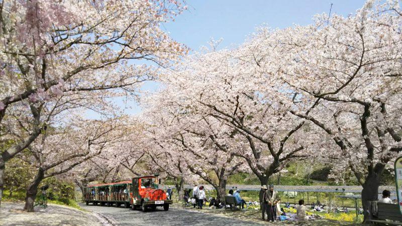 桜並木とお花見列車