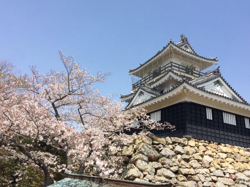 桜と浜松城